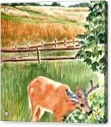 Deer Eating Leaves Acrylic Print