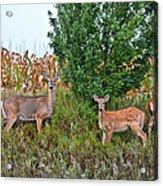 Deer Family Acrylic Print
