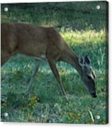 Deer Fields Acrylic Print