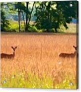 Deer In A Field Acrylic Print