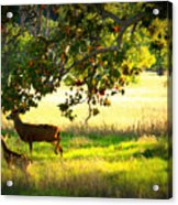 Deer In Autumn Meadow - Digital Painting Acrylic Print