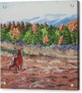 Deer In Fall Acrylic Print