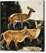 Deer In Forest Clearing Acrylic Print