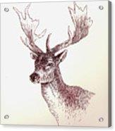 Deer In Ink Acrylic Print