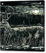 Deer In Moonlight Acrylic Print