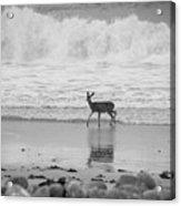 Deer In Ocean Black And White Acrylic Print