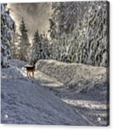 Deer In Snow Acrylic Print