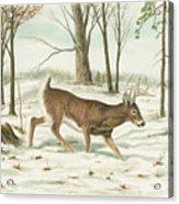 Deer In Snow Acrylic Print