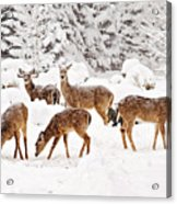 Deer In The Snow 2 Acrylic Print