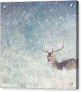 Deer In Winter Scene Acrylic Print