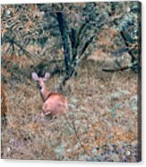 Deer In Woods Acrylic Print