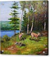 Deer Meadow Acrylic Print