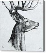 Deer Acrylic Print