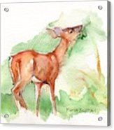 Deer Painting In Watercolor Acrylic Print