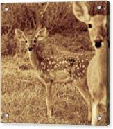 Deer Sepia V3 Acrylic Print