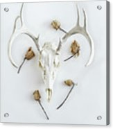 Deer Skull With Antlers And Roses Acrylic Print