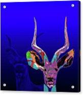 Deer1 Acrylic Print