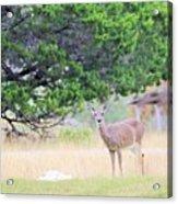 Deer21 Acrylic Print