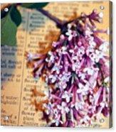 Defining Lilacs Acrylic Print