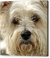 Definition Of Cute Acrylic Print