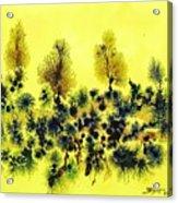 Deforestacion Acrylic Print