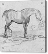 Degas, Horse.  Acrylic Print