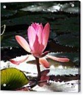 Delicate Beginning Acrylic Print