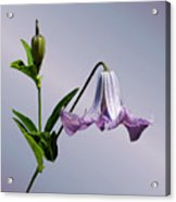 Delicate Bell Acrylic Print