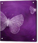 Delicate Butterflies Purple Acrylic Print