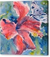 Delicate Butterfly Acrylic Print