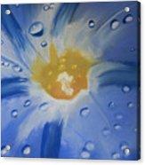 Delicate Dew Acrylic Print