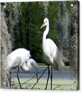 Delicate Egret Romance Acrylic Print