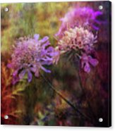 Delicate Fringe 0962 Idp_2 Acrylic Print