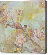 Delicate Magnolias Acrylic Print