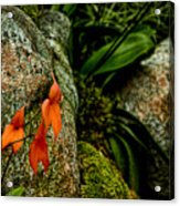 Delicate Orange Acrylic Print