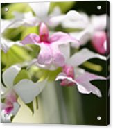 Delicate Orchids By Sharon Cummings Acrylic Print