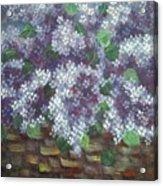 Delicate Perfumed Lilacs Acrylic Print