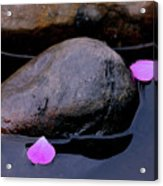 Delicate Petals With Rocks Acrylic Print