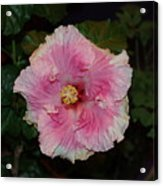 Delicate Pink Flower Acrylic Print