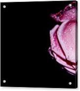 Delicate Pink Acrylic Print