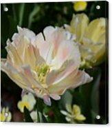 Delicate Pink Tulip 2 Acrylic Print