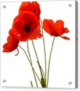 Delicate Red Poppies Vector Acrylic Print