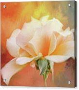 Delicate Rose On Color Splash Acrylic Print