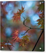 Delicate Signs Of Autumn Acrylic Print