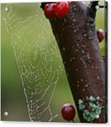Delicate Spider Weave Acrylic Print