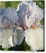 Delicate White Iris Acrylic Print