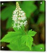 Delicate Wildflower Georgia Mountains Acrylic Print
