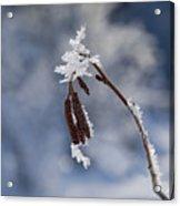 Delicate Winter Acrylic Print