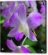 Delicately Purple Acrylic Print