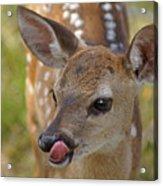 Delicious Deer Acrylic Print